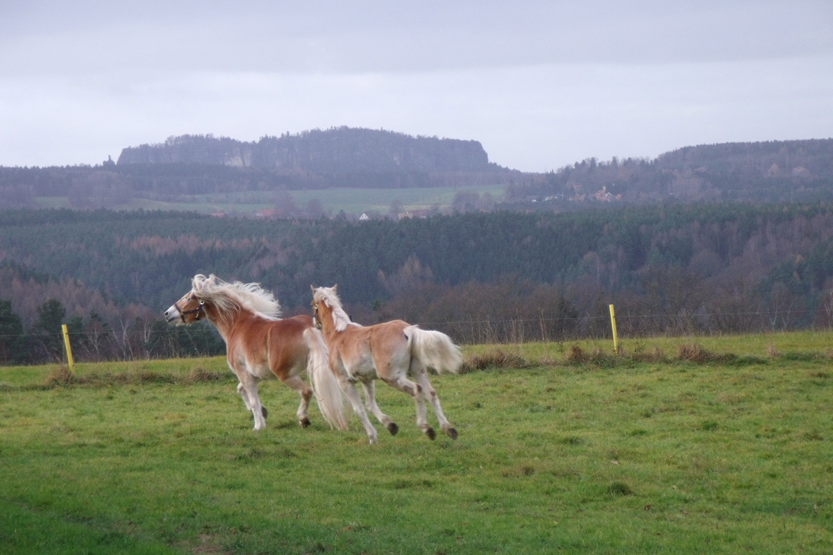 Unsere Haustiere - Pferde auf der Weide